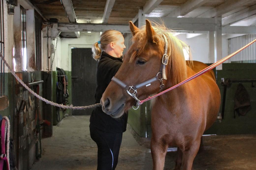 Pferd im Reitstall