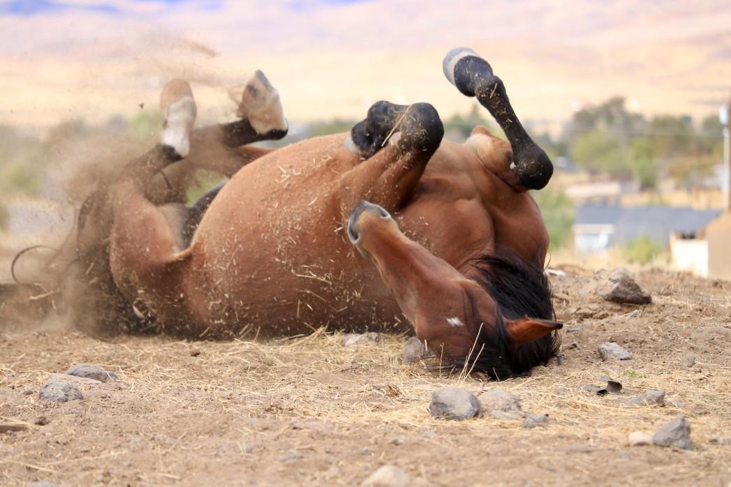 Pferd mit Milben