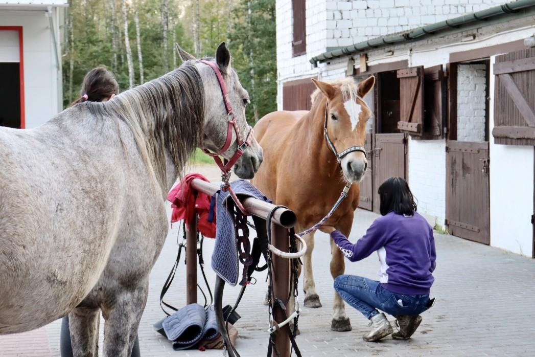 Pferde bei der Pflege