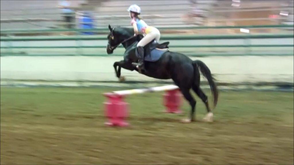 Pferd beim Sprung