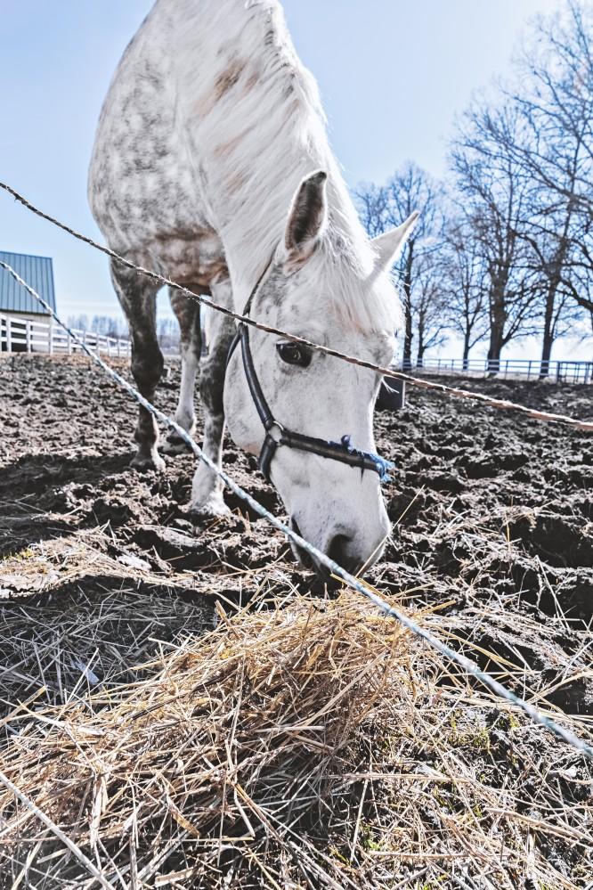 Pferd frisst auf der Koppel