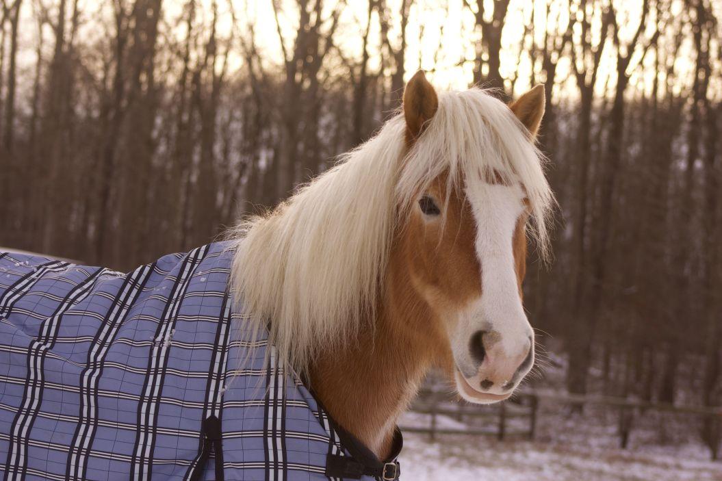 Pferd mit Decke im Winter