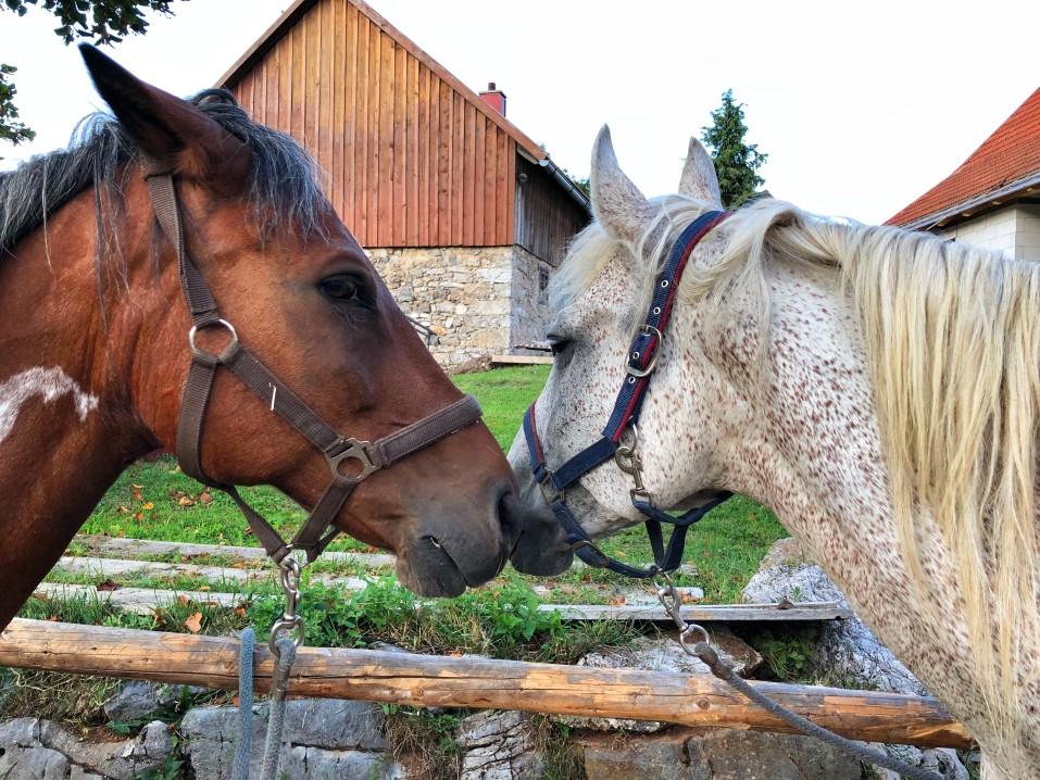 2 Pferde am Zaun