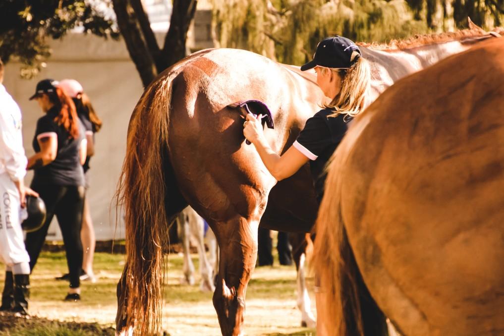 Pferd wird gestriegelt