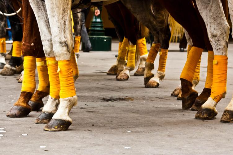 Pferde mit Bandagen