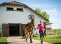 Pferdehaftpflichtversicherungen vergleichen und online abschließen