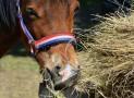Effektive Methoden und Futterautomatten für Pferdefütterung
