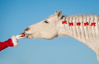 Geschenkideen für Pferdefreunde