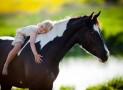 Pferde Kinder näher bringen