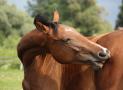 Milben bei Pferden – lästige Plagegeister erkennen, behandeln und vorbeugen