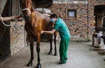 Lebererkrankung bei Pferden