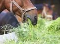 Pferde richtig füttern – das solltest du wissen