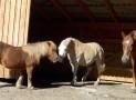 Tipps: So bekommt man den Pferdestall windgeschützt