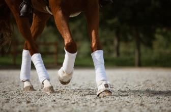 Reitplatzbau – so wichtig ist die Qualität des Reitbodens für das Pferd