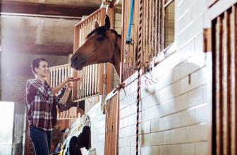 Alles für den Pferdestall und Sattelkammer